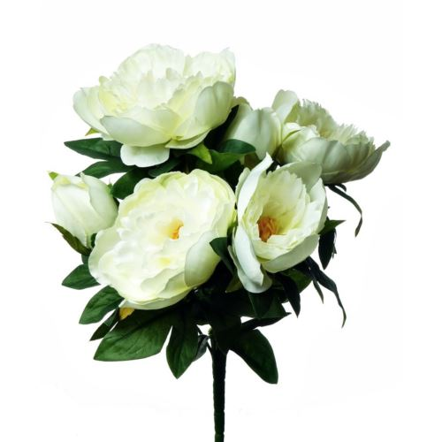 Peonia x7 /7654 White cream