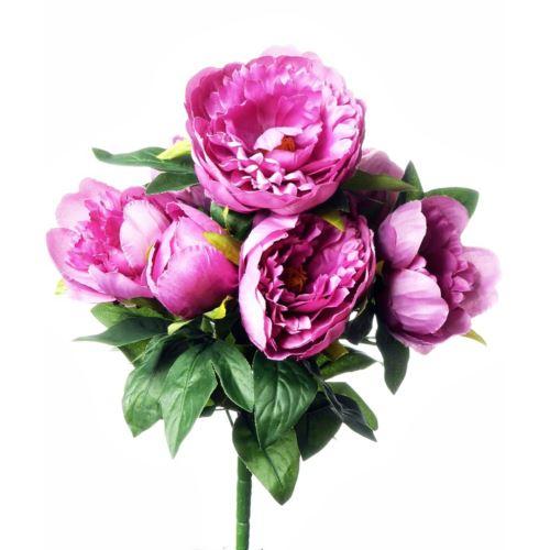 Peonia x7 /7654 Pink