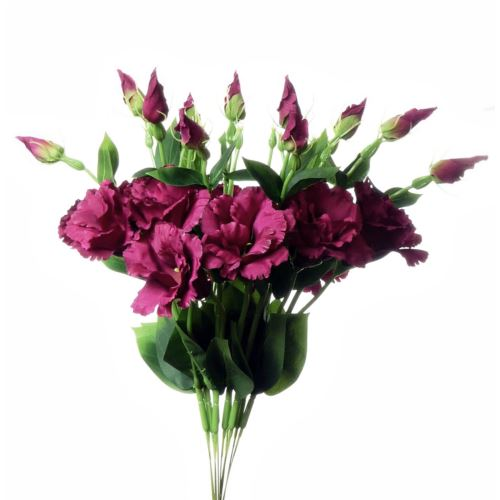 EUSTOMA SPRAY SUN357 FUCHSIA 2268