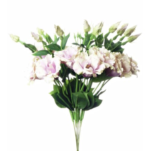 EUSTOMA SPRAY SUN357 POWDER PINK GREEN 2026