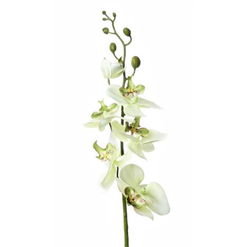 SINGLE ORCHID SUN437 LT.GREEN 1427