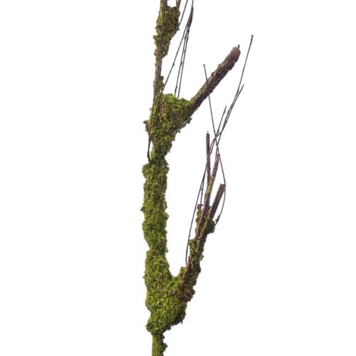 MOSSY STICK LIU222 GREEN