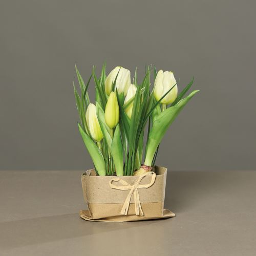 Tulpen (PU)in mud with Tüte, 19 cm, cream, 12/48