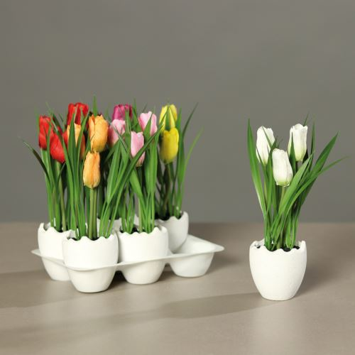 Tulip assortment colour assorted in spring egg, 6