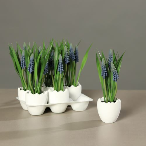 Muscari in spring egg, 6 pcs per Tray, price per p