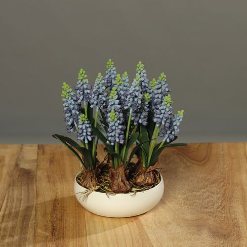 Muscari landscape in ceramic bowl , 24 cm, 4/12