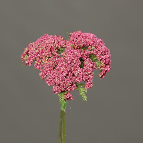 Anethum x 3, price per bundle, 27 cm, pink, 24/144