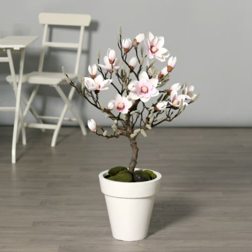 Magnolia-tree in pot 90 cm pink-cream