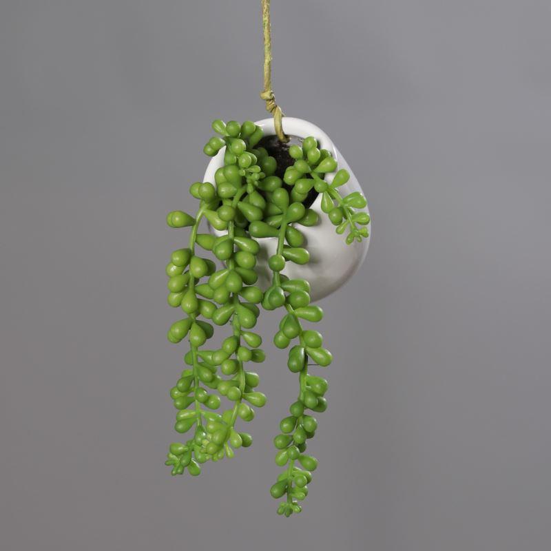 Succulent in ceramic pot, 20 cm, 12/36