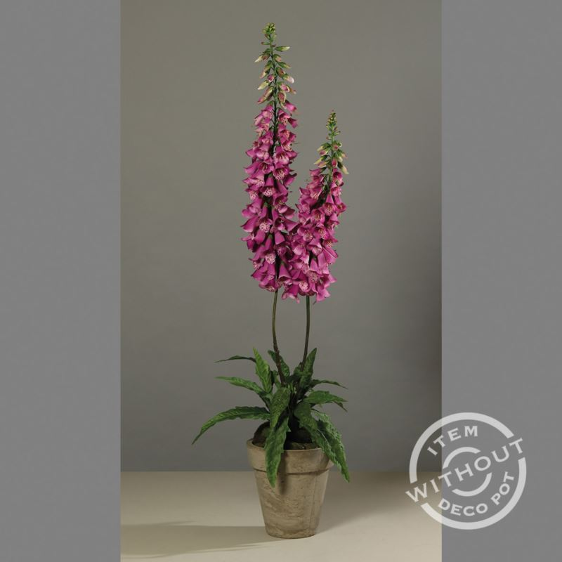 Foxglove poted , 150 cm, lilac, 1/6