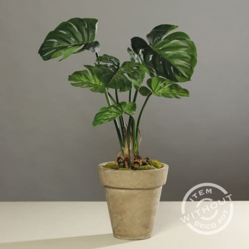 Split-Philo-plant in black plastic pot, 70 cm, 2/4