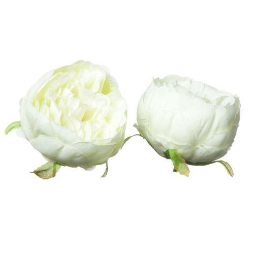 Peonia – Peony head /P001 7cm Cream