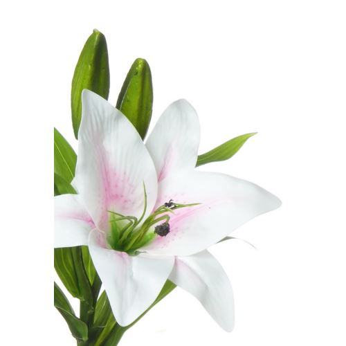 SINGLE LILY MST169 POWDER PINK