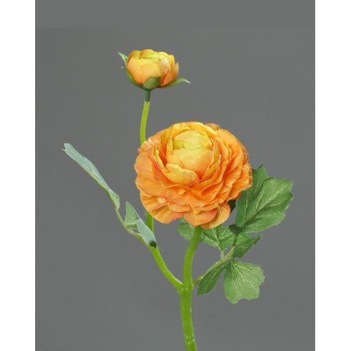 ranunculus  with 1 flower and 1 bud, 37 cm, orange