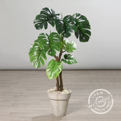 Philodendron Monstera in pot 130 cm 56915