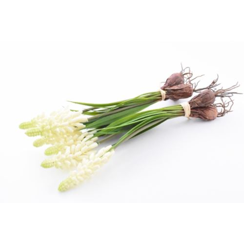 Szafirki cebule, 22 cm, cream