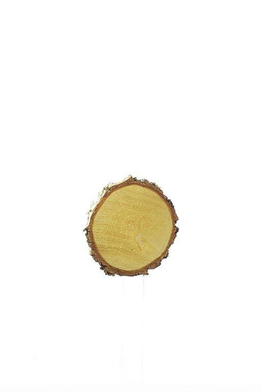 Plaster drewna brzoza (12) śr. 11-13cm  z-3
