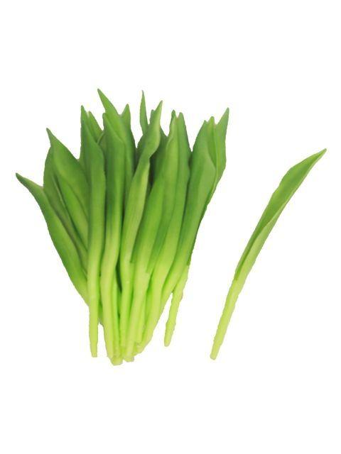 Tulip leaves x24pb 18cm