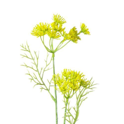 Dill, 56 cm, yellow