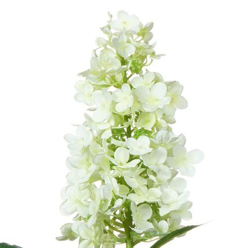 Hortensja ogrodowa  / 4705 White
