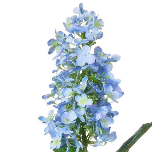 Hortensja ogrodowa  / 4705 Lt blue