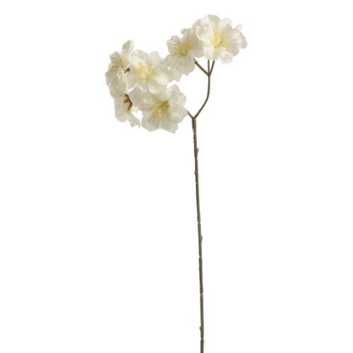 Kwiat czeresni ozdobnej mały