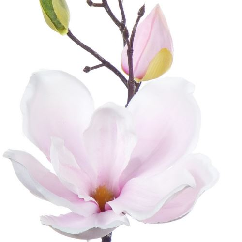 SINGLE MAGNOLIA ART111 LT.PINK