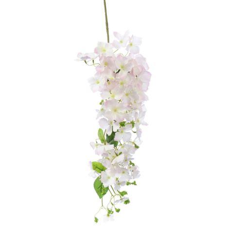 Hortensja ogrodowa zwisająca 100cm cream-pink