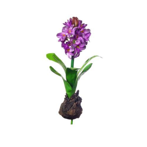 HIACYNT Z CEBULĄ 30 cm  violet purple CV10555