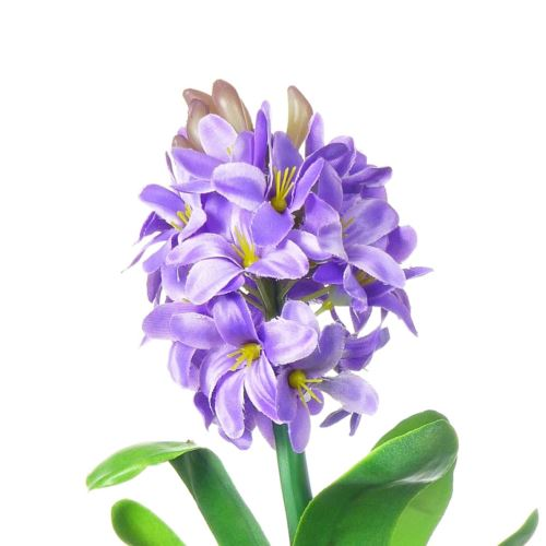 HIACYNT Z CEBULĄ 30 cm lavender CV10555