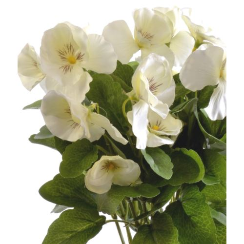 Bratek single pansy 30cm sun417 White