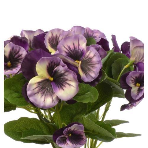 Bratek single pansy 30cm sun417 Purple white