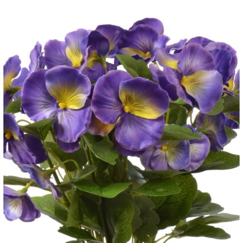 Bratek single pansy 30cm sun417 Purple