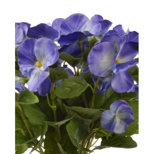 Bratek single pansy 30cm sun417 Blue/Violet