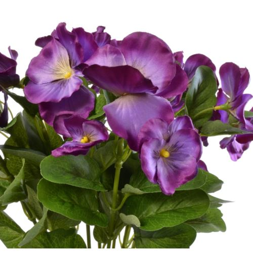 Bratek single pansy 30cm sun417 Lt.Purple