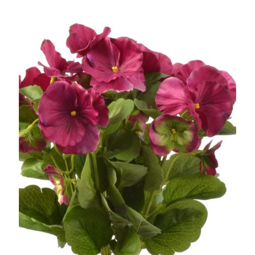 Bratek single pansy 30cm sun417 Beauty