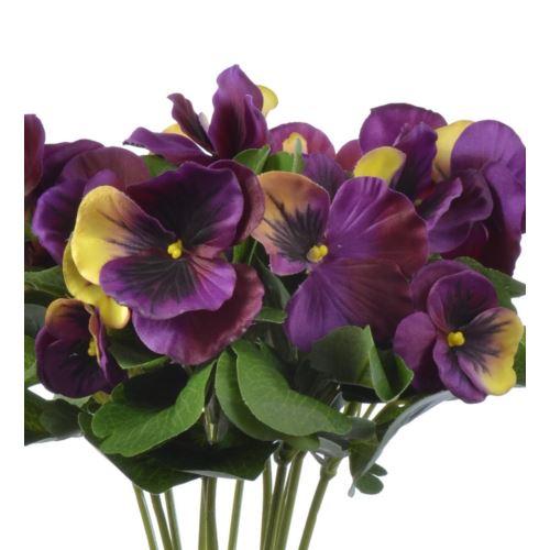 Bratek single pansy 30cm sun417 Purple Yellow