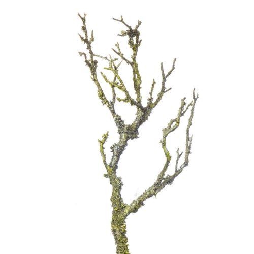 Dzika brzoza gałąź 30cm ze splotem