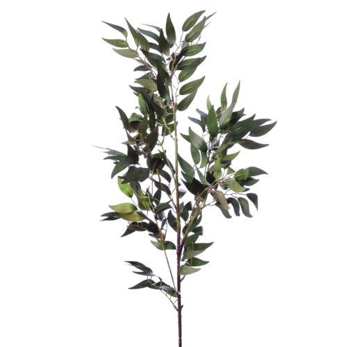 Ruskus gałązka liu 386 olive