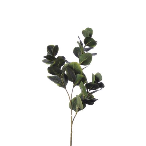 Eukaliptus x3 liu389 dr.green