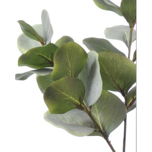 Eukaliptus x3 liu389 powder green