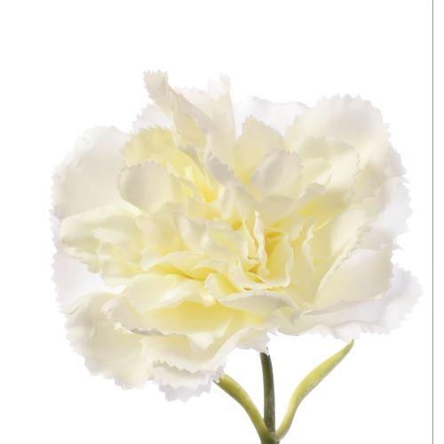 Goździk poj. SUN005 2040 cream