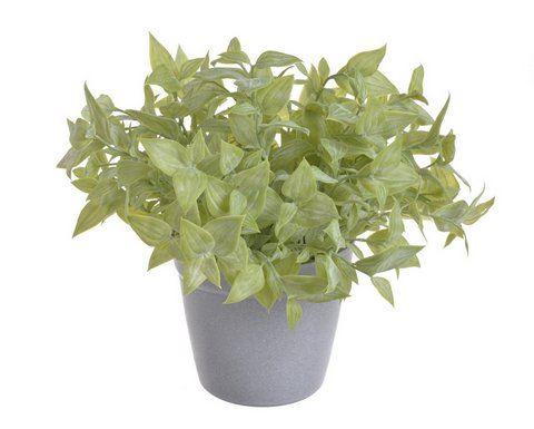 Zielona roslina w doniczce 25cm