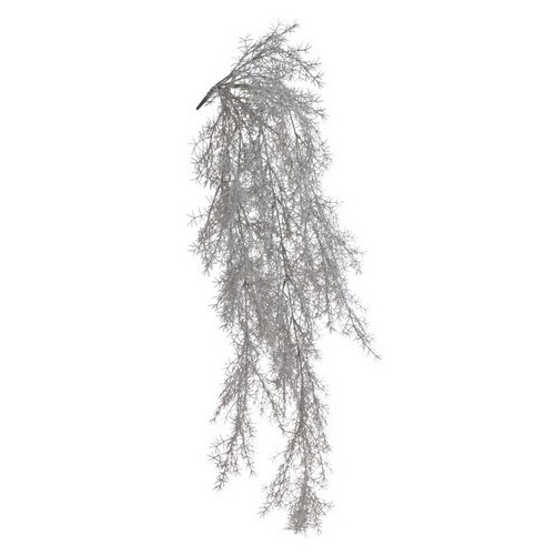 Asparagus zwis LT