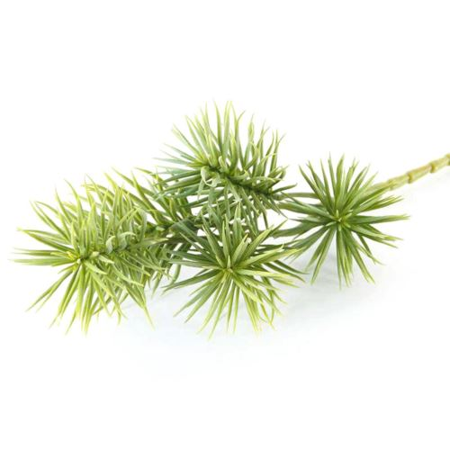 SUKULENT NA PIKU IGLASTY 42cm POWDER GREEN