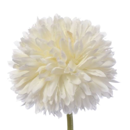 CZOSNEK ALLIUM SINGLE 29 CM CREAM
