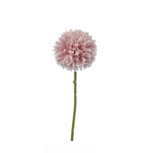 CZOSNEK ALLIUM SINGLE 29 CM MAUVE PINK
