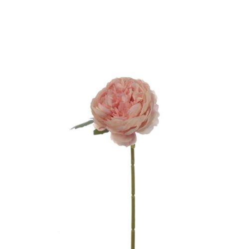 PEŁNIK RANUNCULUS SINGLE 29 CM POWDER PINK