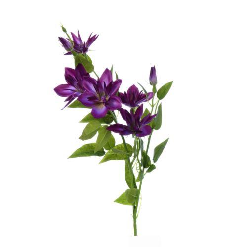 Klematis gałązka sun508 purple