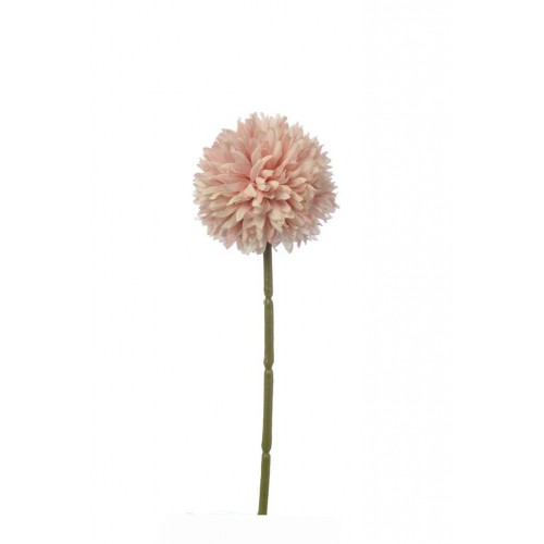CZOSNEK ALLIUM SINGLE 29 CM POWDER PINK